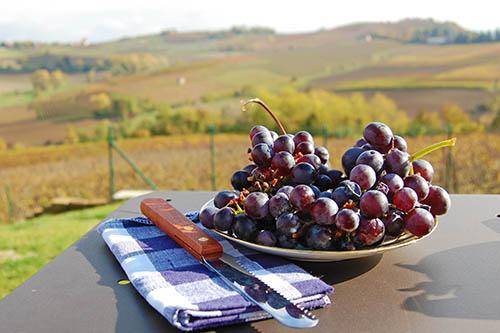 Raisins dans le Piémont en Italie