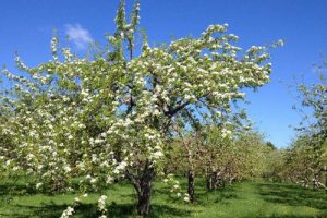 Agrotourisme de mai