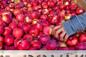 20 sites pour l'autocueillette d'automne