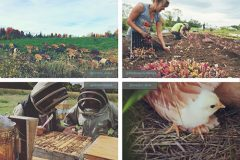 10 comptes Instagram de fermes québécoises à suivre