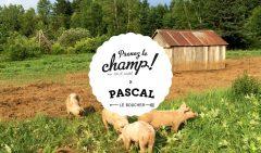 Prenez le champ avec Pascal le boucher à la ferme des Arpents roses