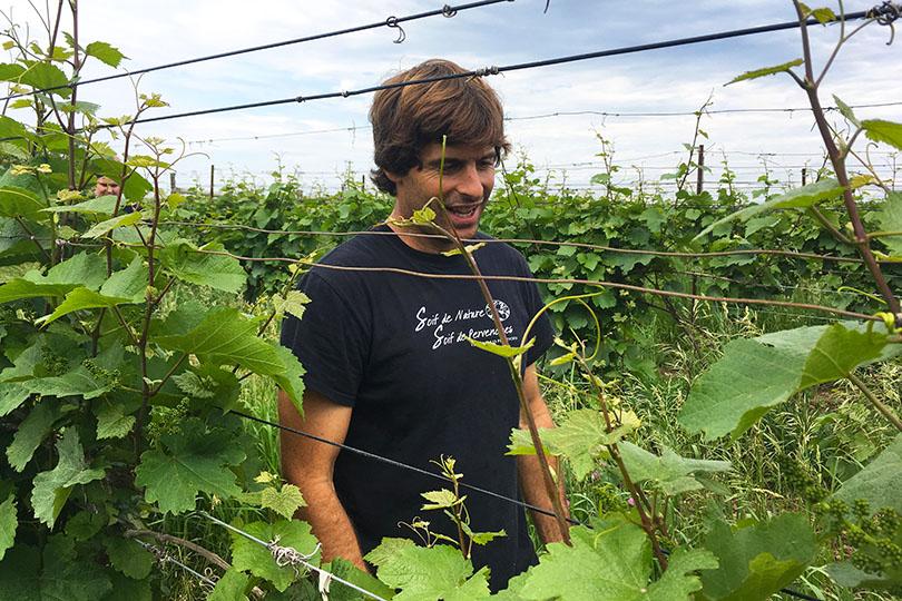 Micheal Marler du Vignoble les Pervenches