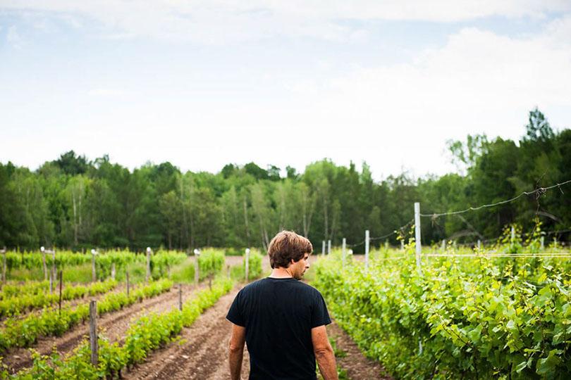 À découvrir : Vignoble Les Pervenches
