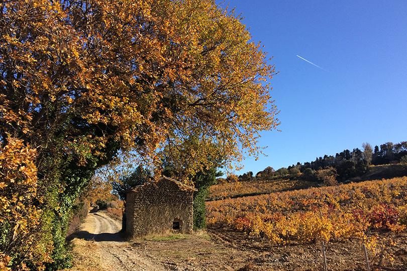 Plein air gourmand dans les vignes de ch teauneuf du pape - Office de tourisme chateauneuf du pape ...
