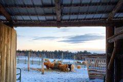 Au pied levé : de la ferme au gîte et à la table