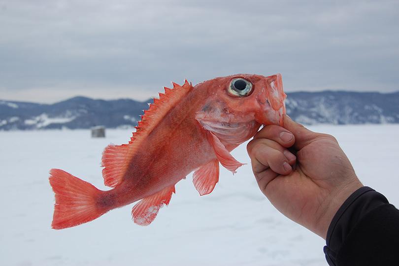 Histoires de pêche blanche