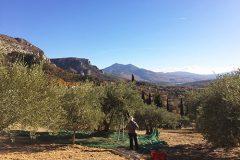 Mes olivades provençales