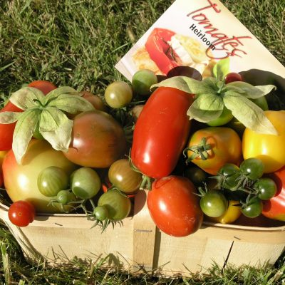 tomates5