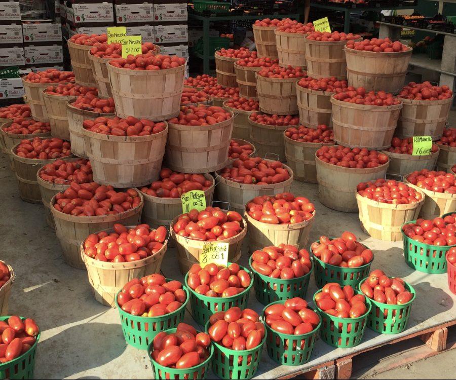 tomates9