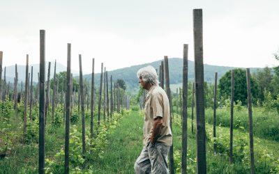 Une histoire de pommes, de vin et de crottin